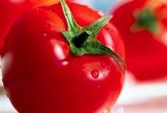 عامل اصلی کاهش تولید گوجه فرنگی چیست ؟