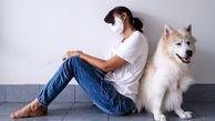در دوران قرنطینه، حیوانات خانگی نگه داری کنید