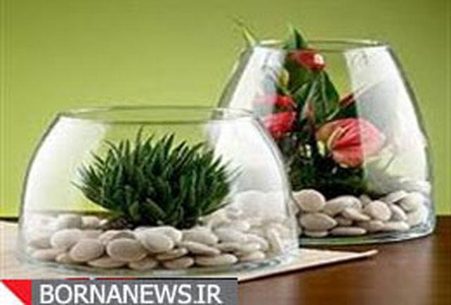 6 واژه جدید در گیاهان آپارتمانی ارائه شد