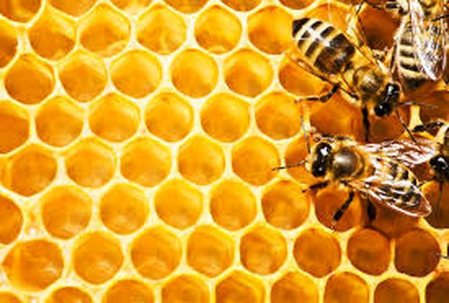 سالیانه بیش از 2300 تن عسل در استان کرمانشاه تولید میشود