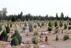 کاشت ۲۴۱ هزار اصله نهال در آذربایجان غربی