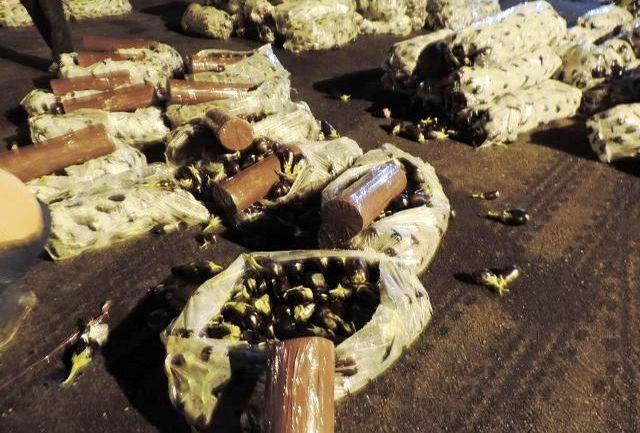 جاسازی 117 کیلو تریاک در محموله بادمجان