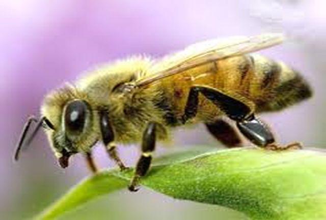 72 نفر در استان هرمزگان به حرفه زنبور داری مشغول هستند