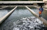 افزایش میزان تولید ماهیان به ۶۰۰ تن در استان اردبیل