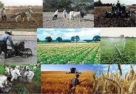 معرفی کشاورزان نمونه قزوینی