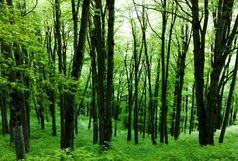 مفقود شدن سومین نفر در جنگل های گلستان/اعزام تیم های جستجو به منطقه