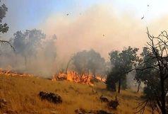 آتشسوزی در جنگلهای پُشتکوه بافت