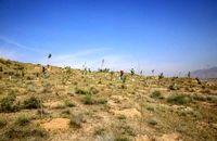 """۴۰۰ هکتار اراضی """"باغستان"""" جنگلکاری شد/ افزایش 3 متری سرانه فضای سبز شهر کرج"""