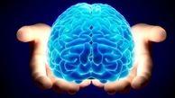 مغز انسان در سر است یا روده؟