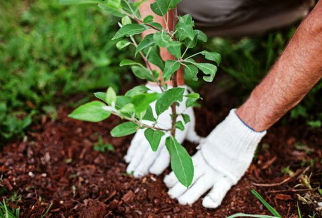 کاشت گونه درختان متناسب با شرایط محیطی هر منطقه/ تربیت همیار طبیعت در راستای توجه به محیط زیست