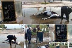 تلف شدن اسب بر اثر برق گرفتگی در پارک غدیر کذب محض است