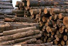 کشف 4 تن چوب جنگلی قاچاق در املش