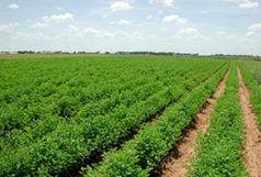 استان همدان در حوزه باغداری از عملکرد خوبی برخوردار است