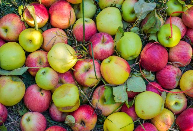 خواص شگفت انگیزی از سیب که تاحالا نمیدانستید