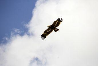 پرواز عقاب ها بر فراز سرزمین آفتاب