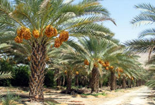 برگزاری سمینار توسعه و اصلاح باغات در شهرستان دزفول