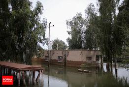 700میلیارد ریال غرامت در 2 هفته گذشته به کشاورزان خسارت دیده چهار استان سیل زده کشور پرداخت شد/ از مجموع بیش از 100هزار هکتاری که در خوزستان دچار خسارت شدند 62هزار هکتار بیمه بودند