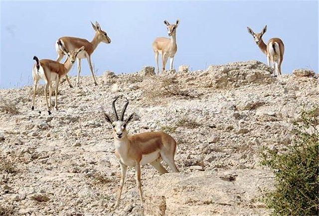 ورود به مناطق حفاظتشده ملایر از اول اردیبهشت ممنوع شد