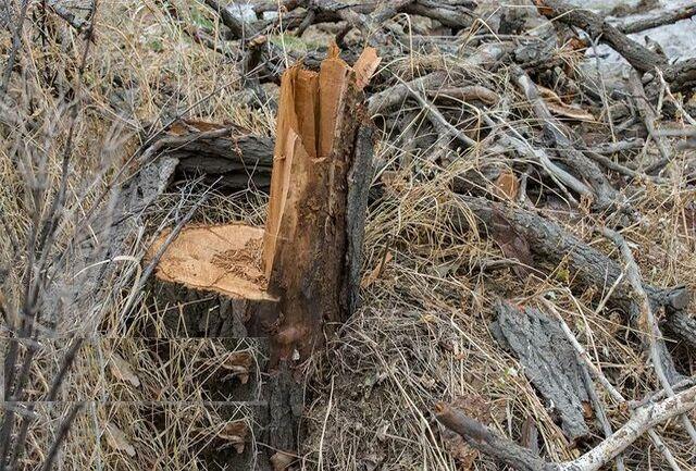 ممنوعیت خروج چوب از آذربایجان شرقی