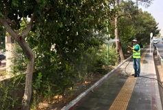 افزایش مبارزه با آفات نباتی فضای سبز قم با تشدید گرمای هوا و گردوغبار