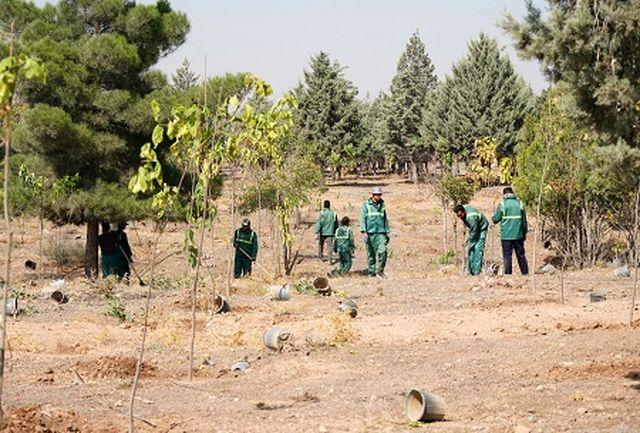 اجرای طرح مزرعه شهروندی در شهرجدید هشتگرد /افزایش 10 برابری فضای سبز با کاشت 20 هزار درخت