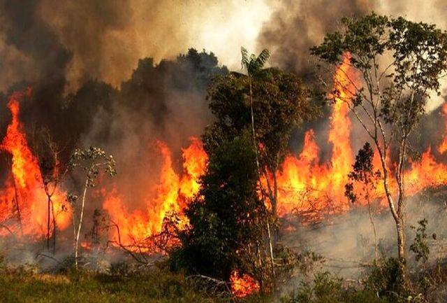 آتش سوزی سریالی این بار در جنگل های ماهورباشت