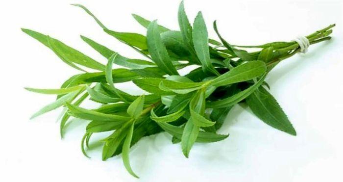 با این گیاه بومی به کلیه های خود جلا دهید