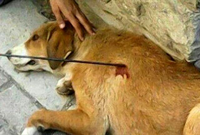 ۷۴ ضربه شلاق برای دو متخلف حیوان آزار در رضوانشهر