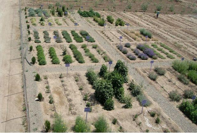 باغ گیاهان دارویی علوی توسعه مییابد