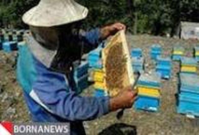 آغاز آمارگیری از کلنیهای زنبور عسل در خراسان شمالی