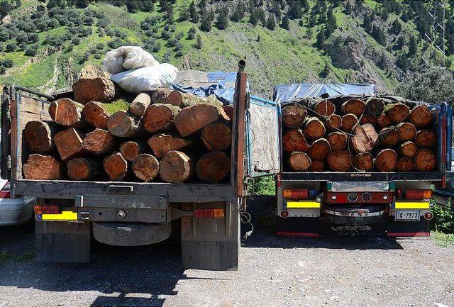 کشف 11 تن چوب قاچاق