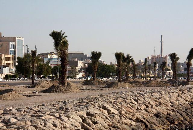 اجرای فاز اول کاشت درخت نخل در بلوار ساحلی بندرعباس