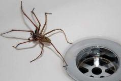 کشتن عنکبوت در خانه ممنوع!