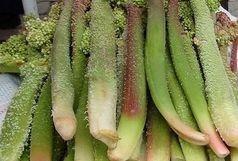 بهترین سبزی برای تحریک رشد استخوانها