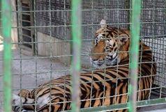 درخواست پلمب باغ وحش مشهد به دادستانی ارائه شد