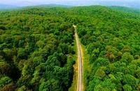 بخشی از جنگلهای هیرکانی گیلان در فهرست ملی به ثبت رسید
