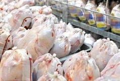 عرضه گوشت مرغ گرم با قیمت 15 هزار و 750 تومان در استان زنجان