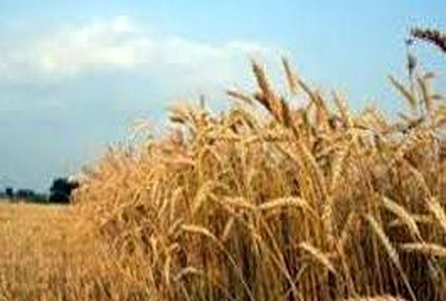 برگزاری گردهمایی هم اندیشی کشت پائیزه در سازمان جهاد کشاورزی لرستان