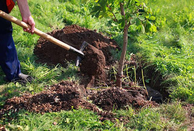 """کاهش آلایندگی مرکز دفن زباله """"حلقه دره"""" با کاشت 11 هزار نهال"""