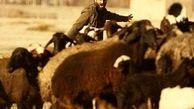 آیین رونمایی از فیلم «دیپورت» برگزار میشود