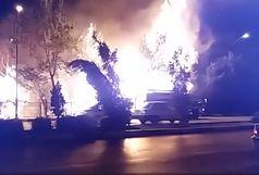 آتشسوزی درختان خیابان پروین عمدی نبود