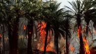 آتش۱۸۵۰ اصله درخت خرما را در نیکشهر خاکستر کرد