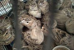 محموله پرنده قاچاق در سیستان و بلوچستان کشف شد