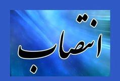 انتصاب مدیر امور اداری شورای اسلامی شهر بندرعباس