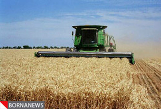 سال آینده نیز در تولید گندم خودکفا خواهیم شد