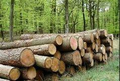 10 تن چوب قاچاق در قزوین کشف شد
