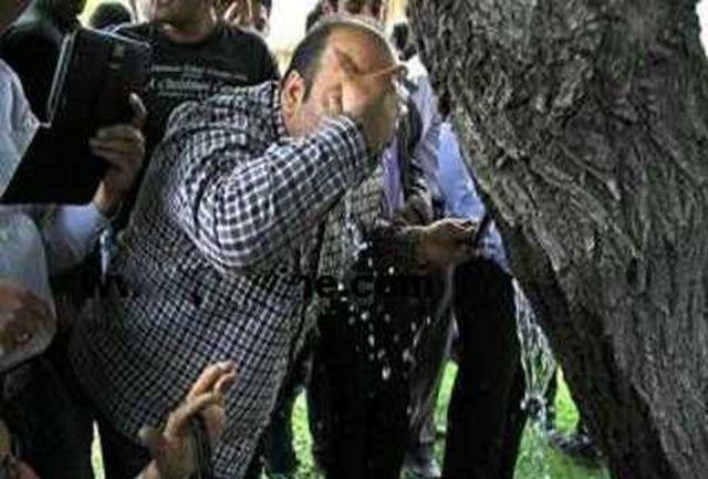 راز عجیب گریه این درخت شفا بخش+ عکس