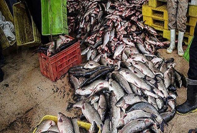 کشف بیش از 2 تن ماهی قاچاق در بازرسی از کامیونت در دشتیاری