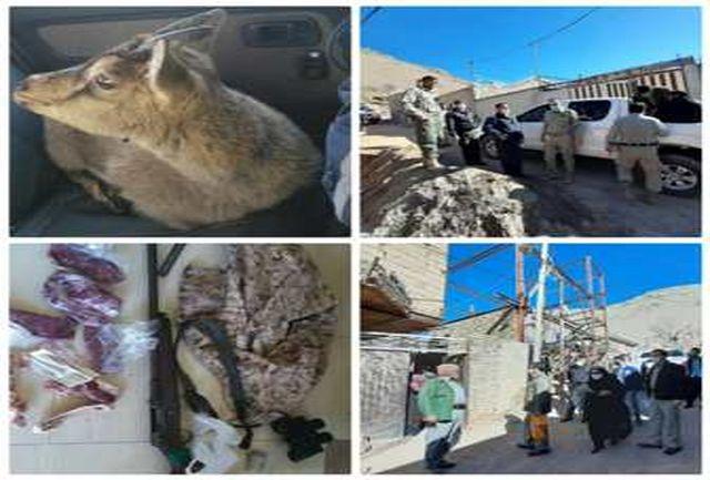 دستگیری عامل زنده گیری بزغاله وحشی در بروجرد