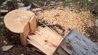 قطع درختچه های جنگلی در دلگان؛ توقیف در گناباد